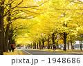 銀杏並木 1948686