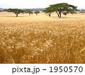 ケニアの大草原 1950570