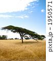 ケニアの大草原 1950571