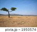 ケニアの大草原 1950574