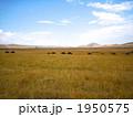 ケニアの大草原 1950575