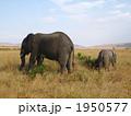 ケニアの親子象 1950577