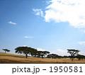 ケニアの大草原 1950581