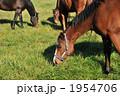 競走馬 哺乳動物 競馬馬の写真 1954706