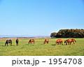 哺乳動物 競走馬 競馬馬の写真 1954708