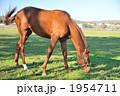 競走馬 哺乳動物 競馬馬の写真 1954711