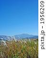 チガヤの白い穂と仙丈ケ岳 1956209