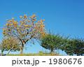土手の柿の木 1980676