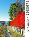 ドウダンツツジの真っ赤な生垣 1980678
