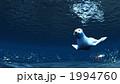 アザラシ アシカ 海獣 1994760
