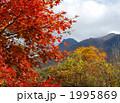箱根桃源台の紅葉 1995869