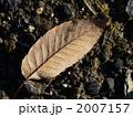 朝露(アベマキ) 2007157