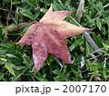 朝露(モミジバフウ) 2007170