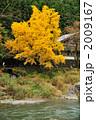 秋の御嶽渓谷 2009167