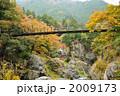 秋の鳩ノ巣渓谷・吊り橋 2009173