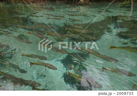 魚の群れ 2009735