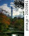 秋の向島百花園からの東京スカイツリー 2020961