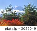 松と富士山-7756 2022049