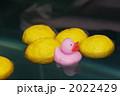 柚子 ユズ 柚の写真 2022429