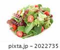 グリーンサラダ 生野菜 ミックスサラダの写真 2022735