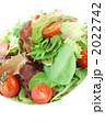 グリーンサラダ 生野菜 ミックスサラダの写真 2022742