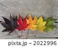 紅葉 葉 落ち葉の写真 2022996