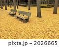 銀杏の葉 銀杏の落ち葉 黄葉の写真 2026665