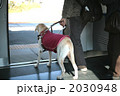 盲導犬 2030948