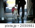 盲導犬 2030981