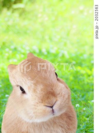 草原の可愛い  うさぎ 合成写真素材 縦 2032563