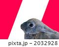 うさぎクール 2032928