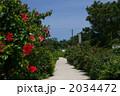 南国の花 白砂の道 道の写真 2034472