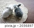 うさぎカップル 2036897