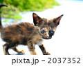 仔猫 哺乳類 陸の哺乳類の写真 2037352