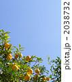 柚子 ゆず ユズの写真 2038732