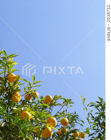 柚子と青空のコピースペース ~ 縦カット 2038732