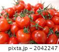 プチトマト ミニトマト 食べ物の写真 2042247
