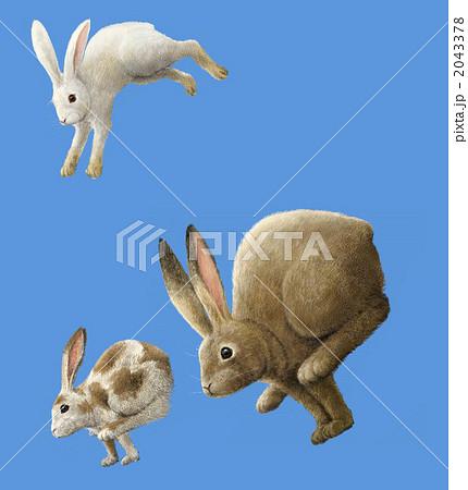 走って跳ぶウサギの群れのイラスト素材 2043378 Pixta