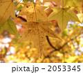 黄葉 2053345