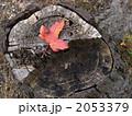 赤い落ち葉 2053379