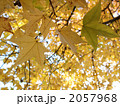 黄葉 2057968