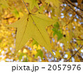 黄葉 2057976
