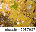 黄葉 2057987