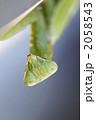 かまきり 螳螂 蟷螂の写真 2058543