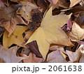 落ち葉(モミジバフウ) 2061638