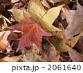 落ち葉(モミジバフウ) 2061640
