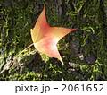 赤い葉 2061652