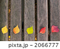 枯れ葉 木の葉 木葉の写真 2066777
