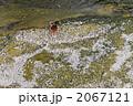 カモ 花筏 花いかだの写真 2067121