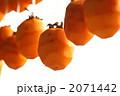 干し柿 干柿 渋柿の写真 2071442